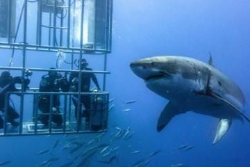 shark diving cape town