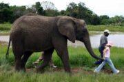 Walking with elephant
