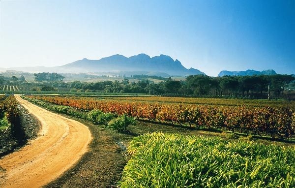 wine route cape town