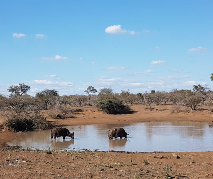 madikwe safaris