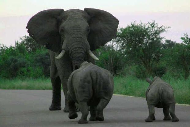 238a84f29769 THE BIG 5 OF THE KRUGER PARK % - Soweto Tours and Travel